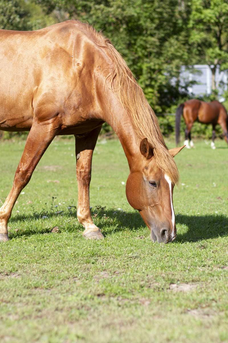 Bauer streichelt Pferd auf Koppel am Bauernhof
