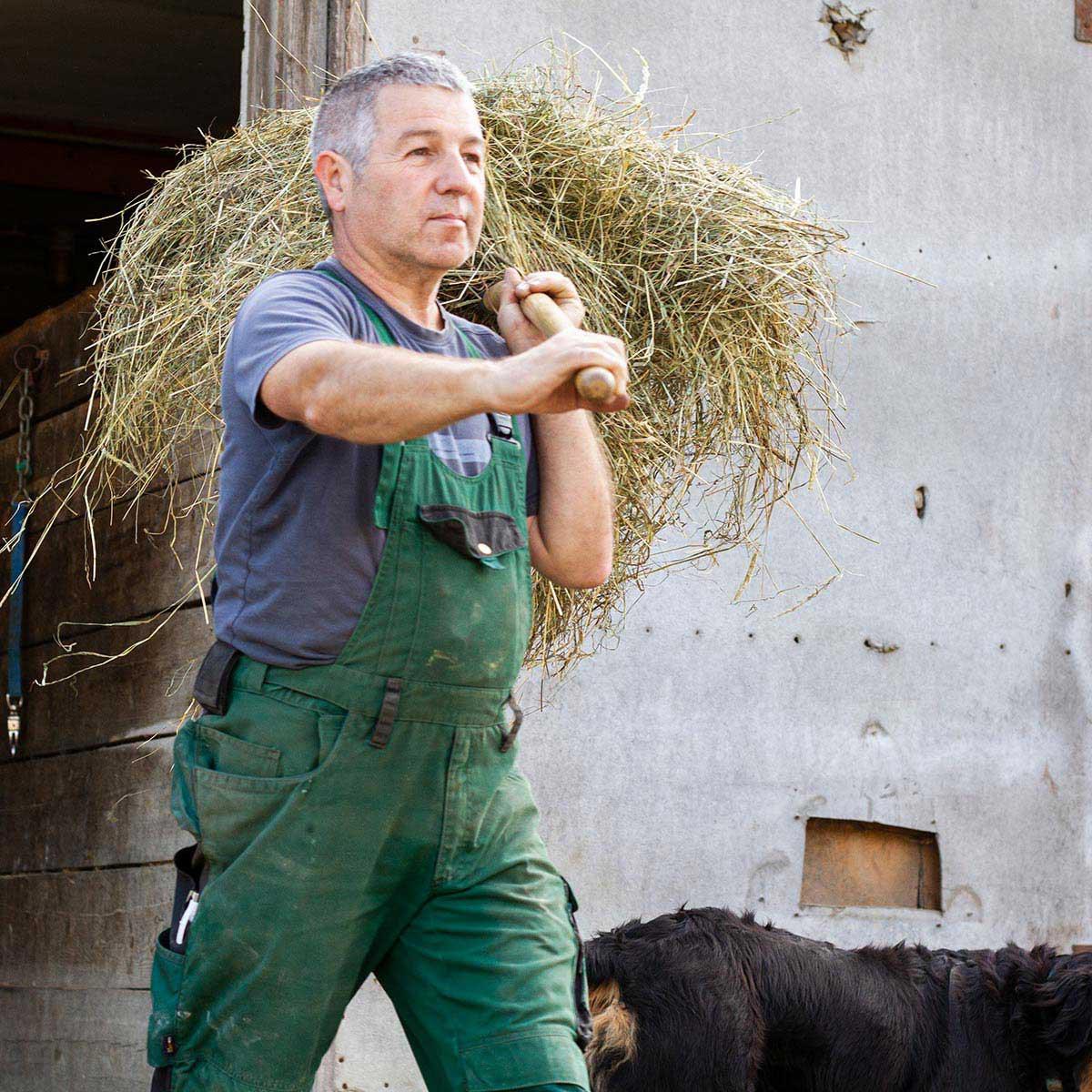 Bauer Herbert füttert die Pferde mit frischem Futter